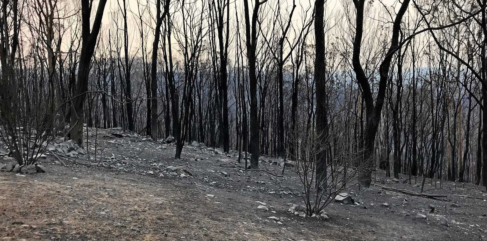 CALLING FOR HELP: After the Long Gully fire tore through the remote community it's been like