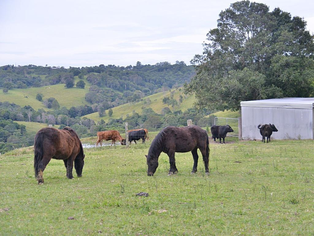 532 Black Mountain Rd, Black Mountain comes with six paddocks for horses or cows.