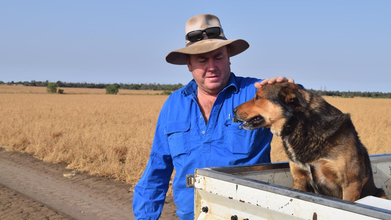 Emerald Barley farmer Mark Sampson on his property, 30km north of Emerald.