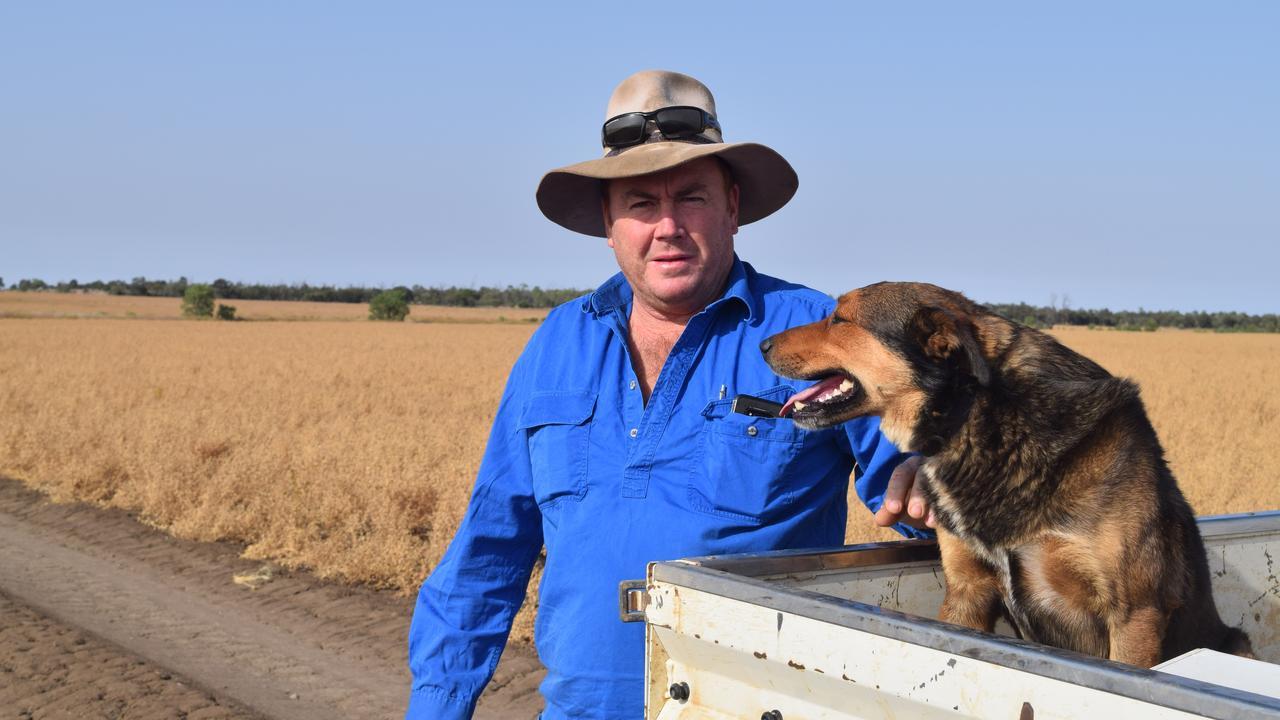 Emerald Barley farmer Mark Sampson on his property, 30kms north of Emerald.