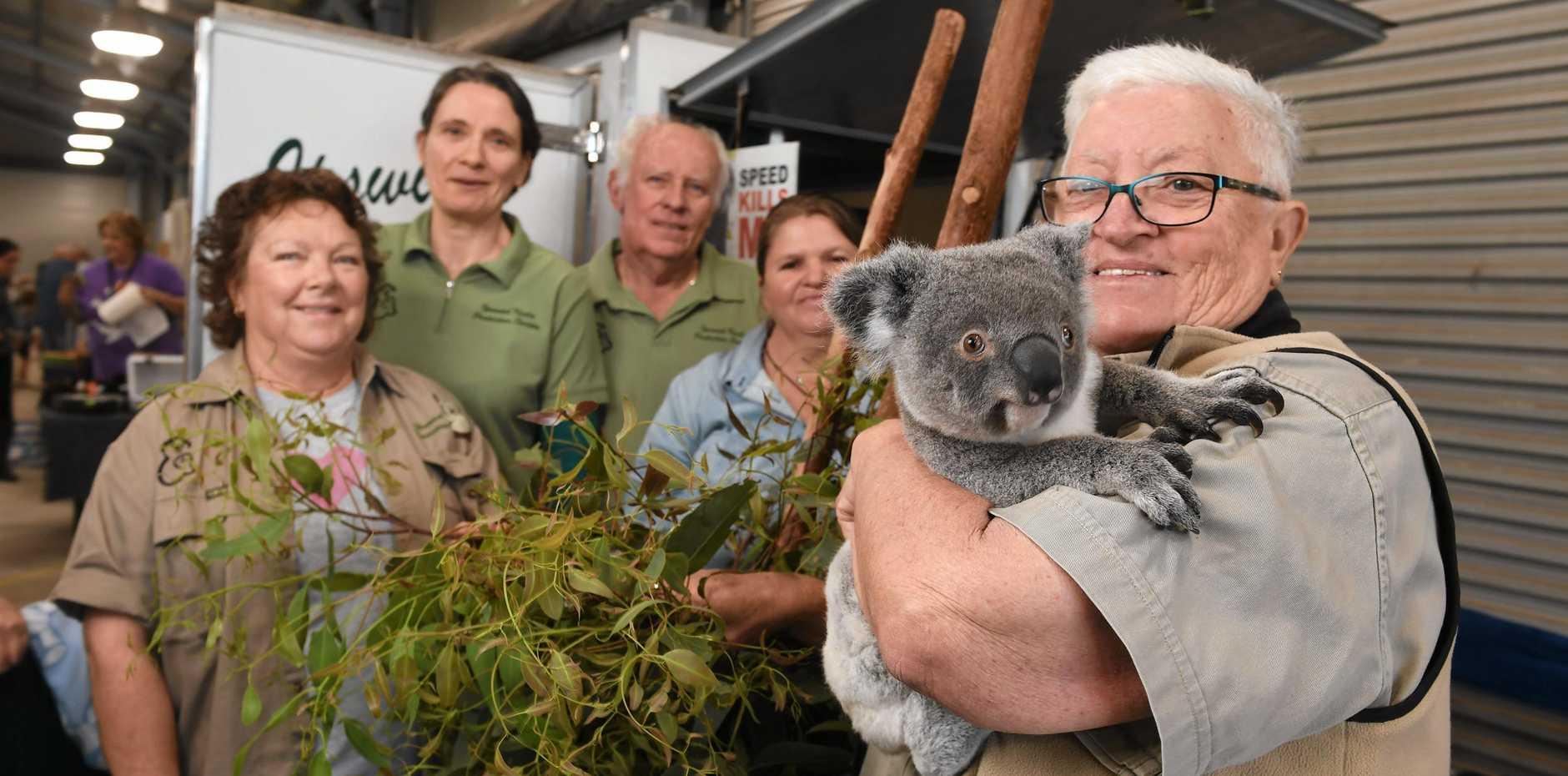 PROTECTORS: The Ipswich Koala Protection Society is celebrating its 25th anniversary. Members Maureen Hall, Dr Rebecca Larkin, Steve Hall and Marilyn Spletter with Kotoni the koala.
