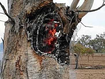 THUNDER AND LIGHTNING, VERY VERY FRIGHTENING: Joanne Cocks captures the exact spot lightning struck a tree on her hobby farm.