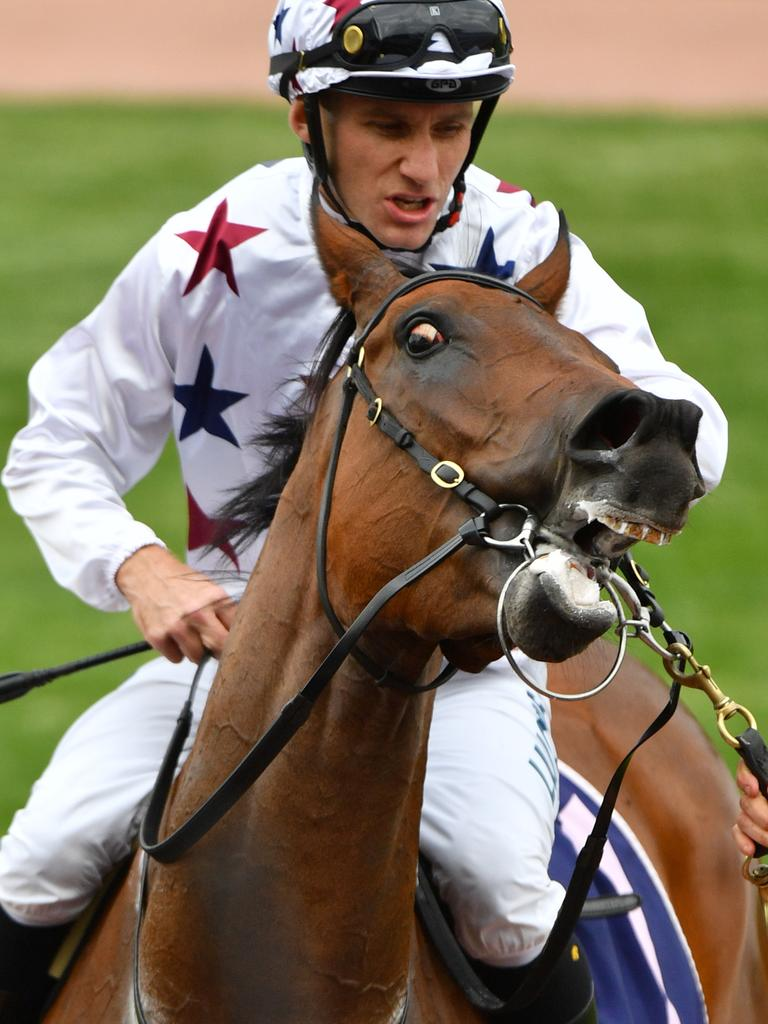 Luke Currie returns to scale the Gilgai Stakes