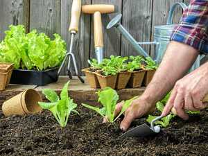 Man and woman to face court after illicit gardening