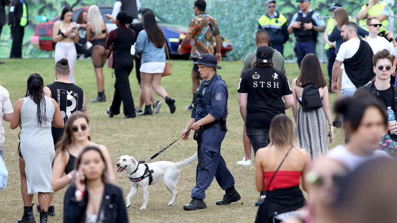 The NSW coroner is also set to recommend the scrapping of sniffer dogs at festivals. Picture: Damian Shaw/News Corp