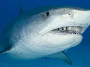 Shark attack fear: 'Need to put drum lines back now'