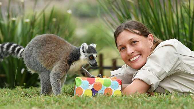 Party animals move it, move it at lemur birthday bash