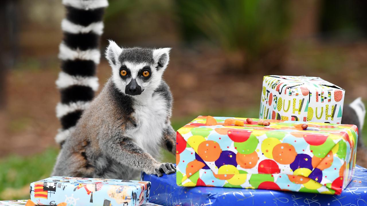 Ro ready to open his birthday presents. Photo: Patrick Woods