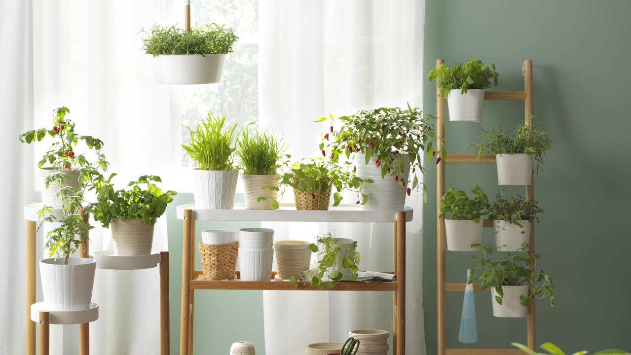 These are the indoor plants suitable for any home.