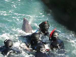 Dolphin hunt in Taiji