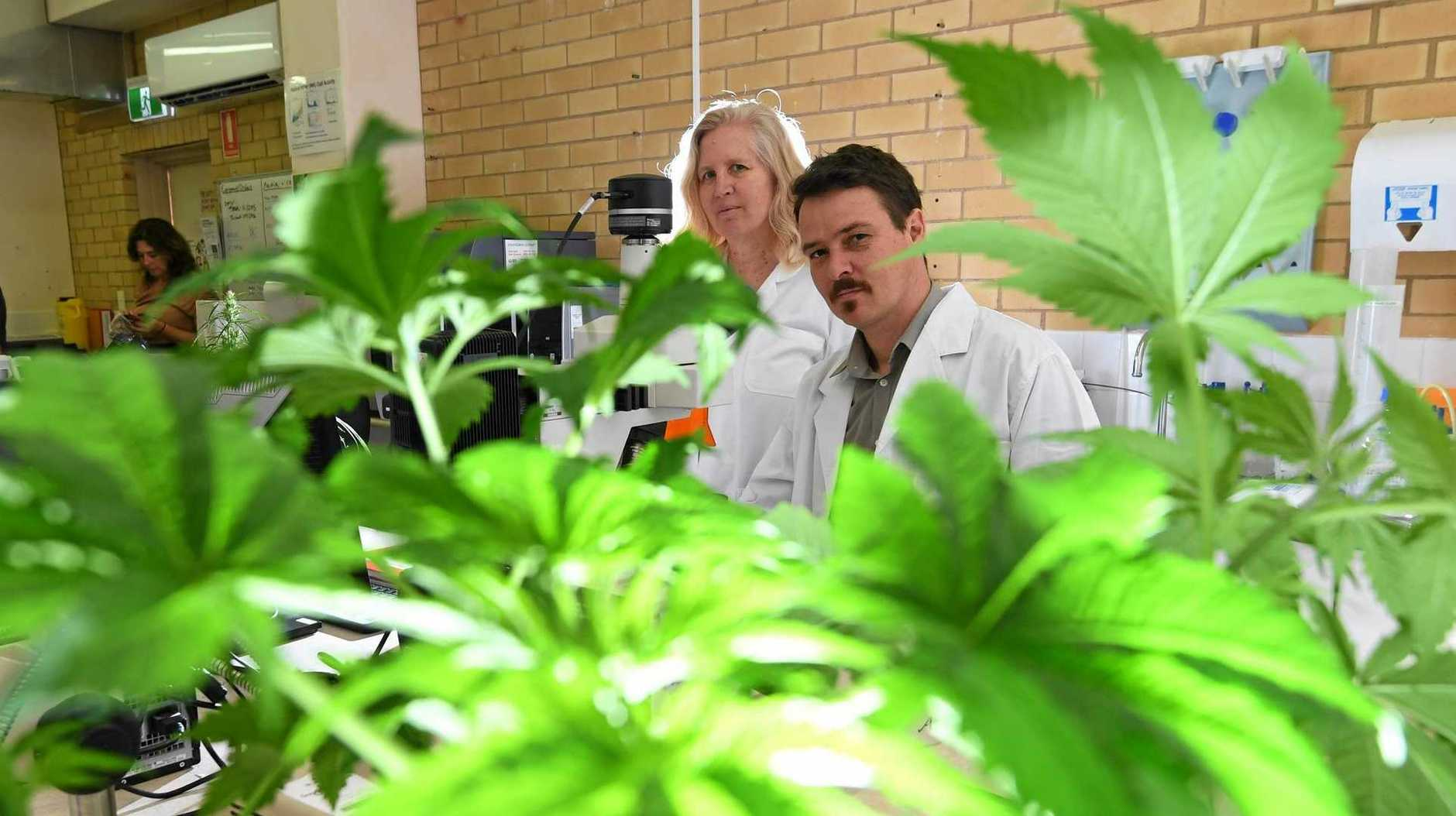 Associate Professor Bronwyn Barkla, Director of the Universitys Southern Cross Plant Science, and Associate Professor Tobias Kretzschmar will help to underpin pioneering research into the medicinal cannabis industry in NSW, analysing the plants physiology and biochemistry.
