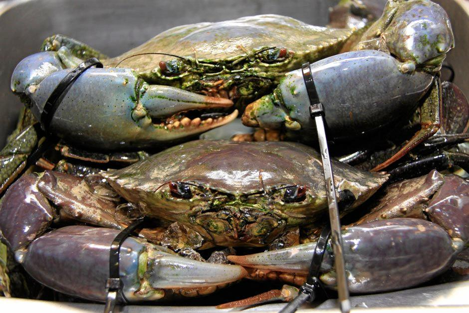 For recreational anglers, the mud crab limit has been reduced from 10 to seven