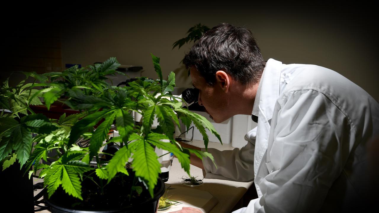 Associate Professor Bronwyn Barkla Tobias Kretzschmar examines a plant.
