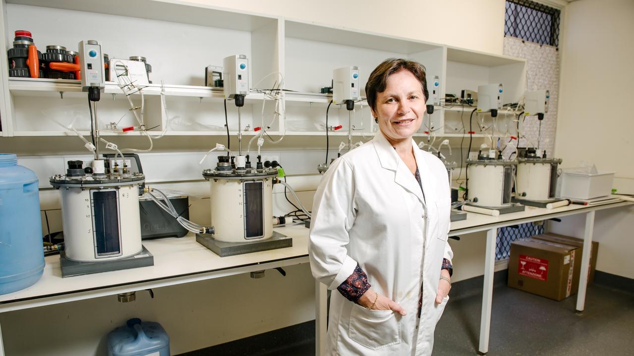 USQ Principal Scientist Professor Bernadette McCabe Photo: USQ Photography/David Martinelli