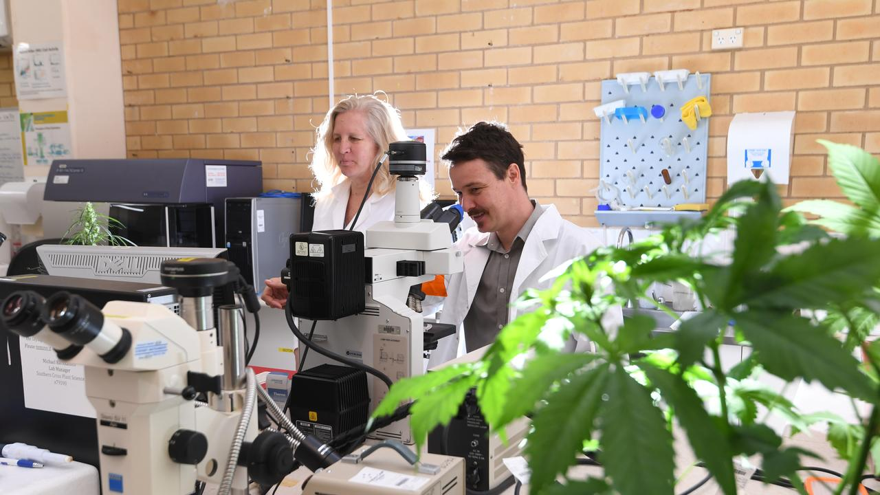 Associate Professor Bronwyn Barkla and Associate Professor Tobias Kretzschmar will help to underpin pioneering research into the medicinal cannabis industry in NSW, analysing the plant's physiology and biochemistry.