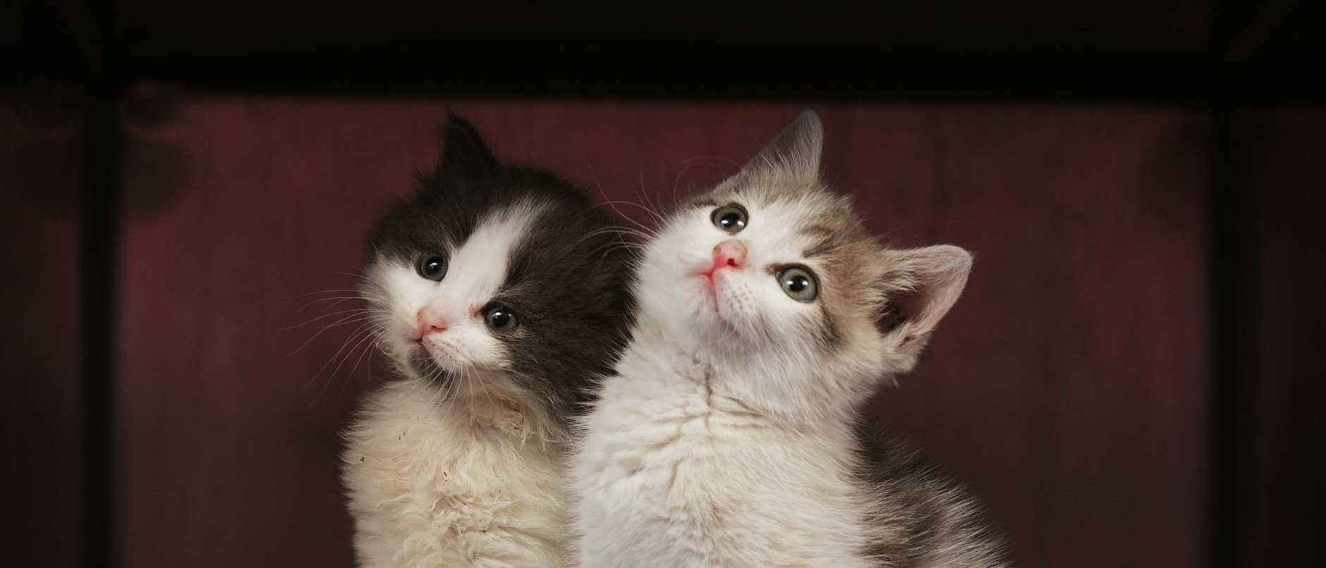 RSPCA New Kitten Nursery