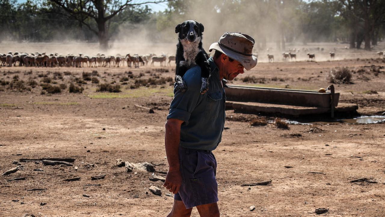 Australian farmer Richard Gillham carries his tired dog on his shoulder