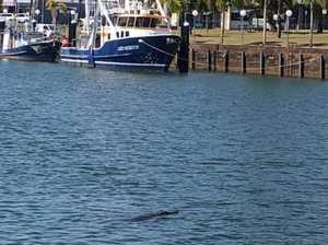 Spot the croc: Stickybeak saltie checks out fishos
