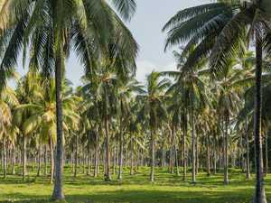 Mass overdose as coconut booze kills nine and hurts 100