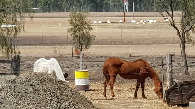 Concerns raised over welfare of horses
