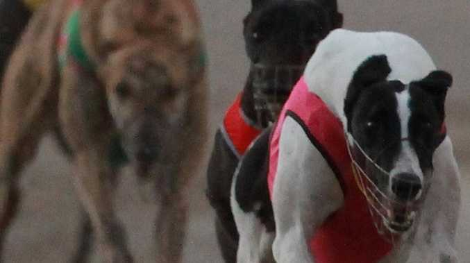 COMMENT: $40m investment means greyhounds here to stay