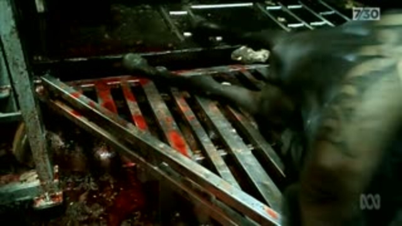 Serious questions have been raised about the welfare of racehorses, with thousands winding up in slaughterhouses.