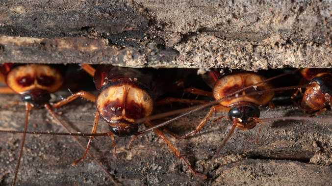 Diners sick, roaches found in popular Indian eatery