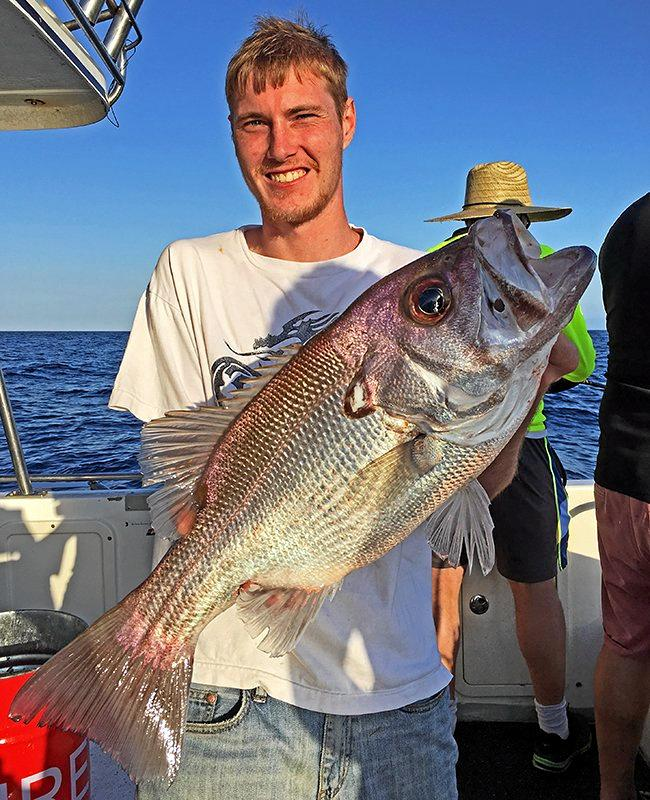 Gotcha - Pearl perch, snapper and Maori cod from recent Cougar One charters to North Reef.