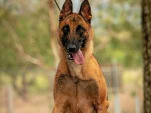 Dogs looking for homes after military life