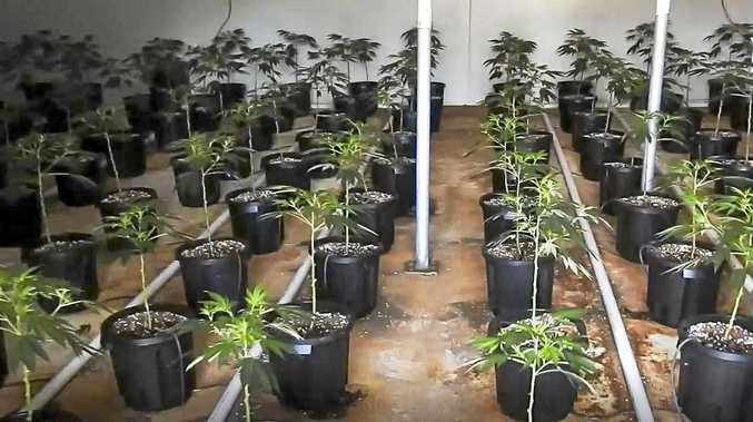 Marijuana mega-farm found thanks to tip-off