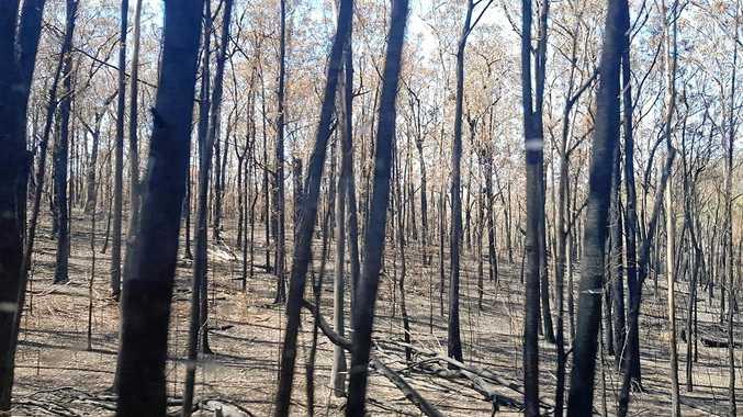 Huge effort to save animals after 'horrific' bushfires