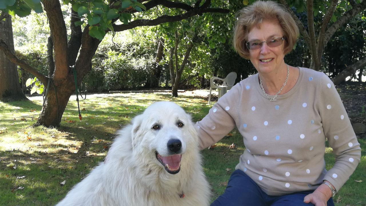 Anne pictured with her beautiful Guardian Maremma dog, Georgie.