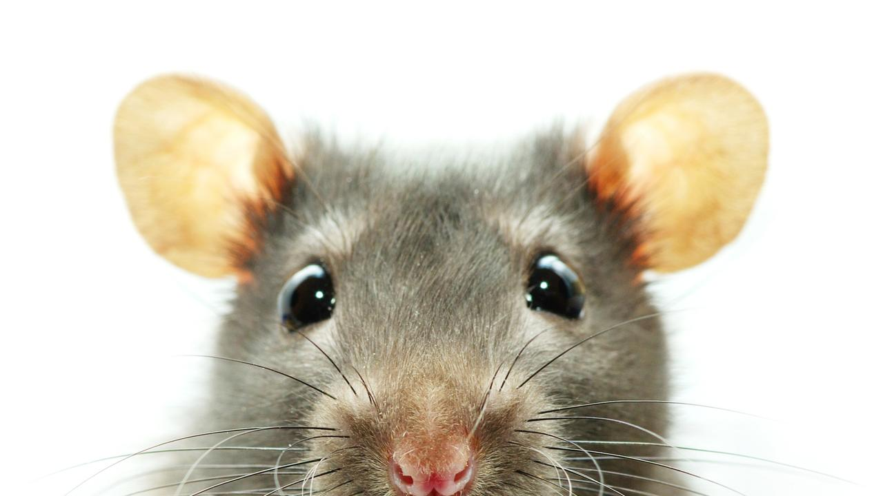 Australians are using excuses including the mouse ate my receipts when going to file their tax returns.