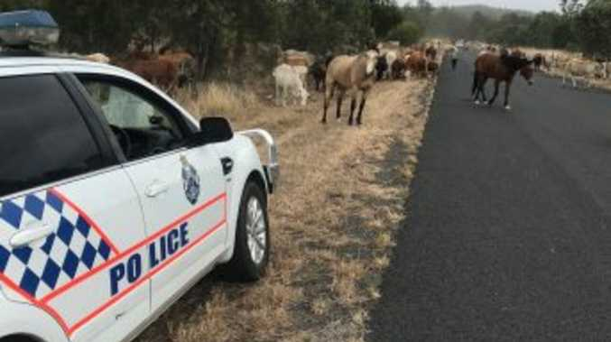 Police issue unusual 'mooooooo-ve on' notice