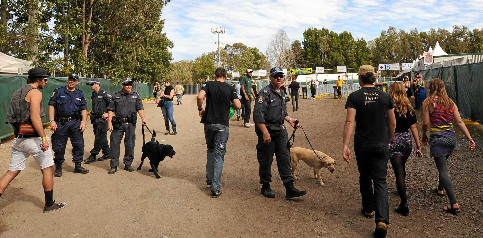 Police sniffer dogs at Splendour in the grass festival.  photo David Nielsen/The Northern Star