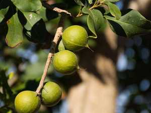 Going nuts: Macadamia orchard fetches $60m record price