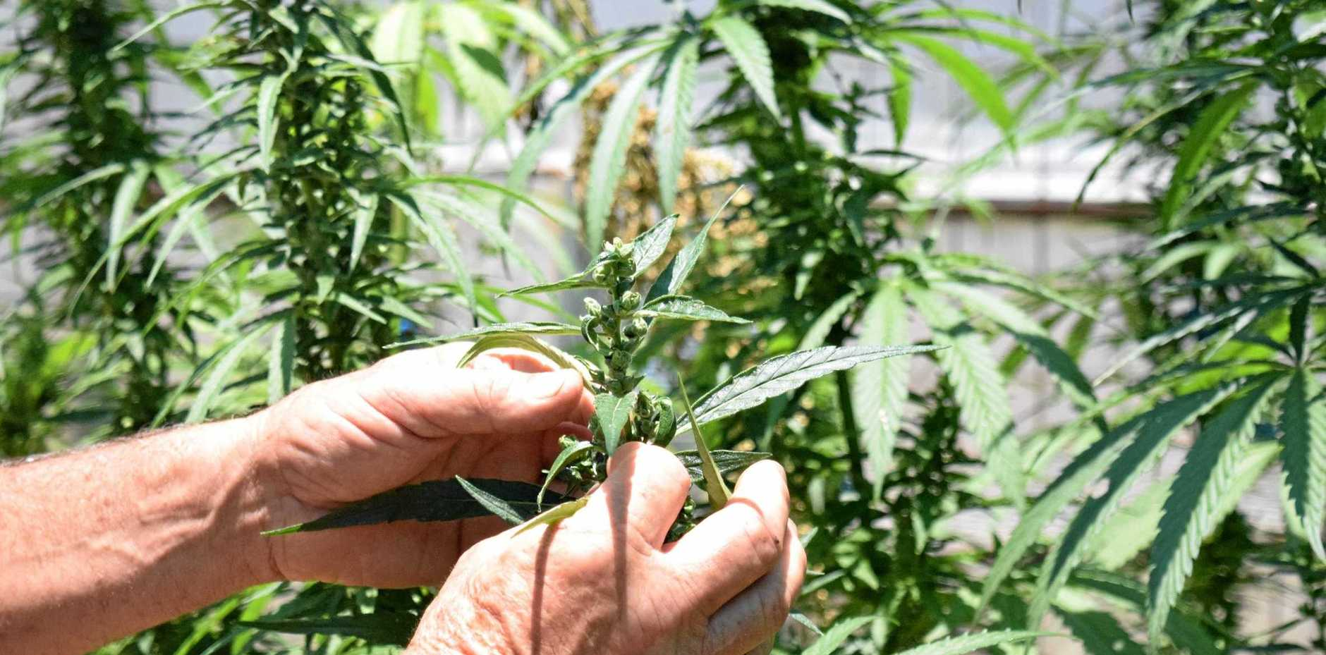 A man who grew cannabis in an underground shipping container has faced court.