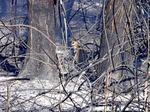 Potentially millions of animals lost in bushfires