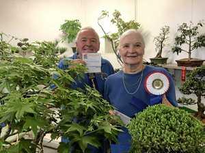 Champions of bonsai