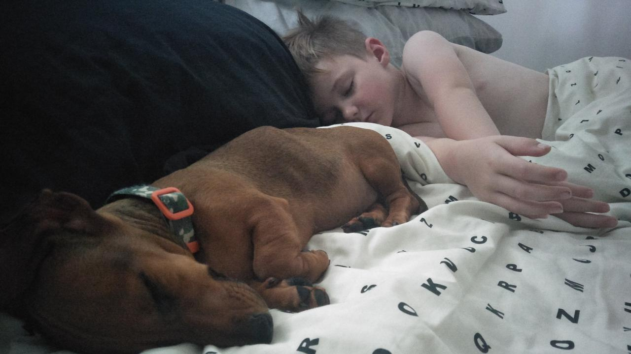 POISONED DOG: Six-year-old Hamish Griffiths snuggles up with Sizzle, the puppy died on Monday.