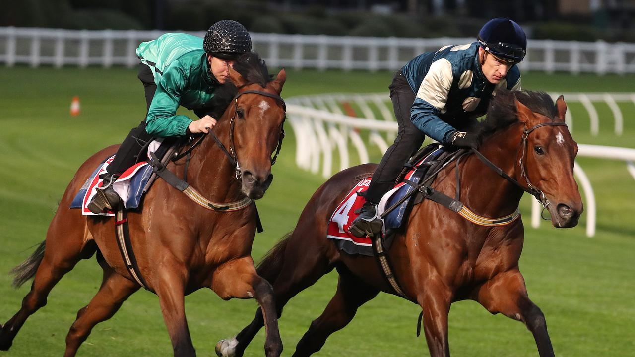 Humidor (left) is first emergency for the Cox Plate. Picture: Micheal Klein