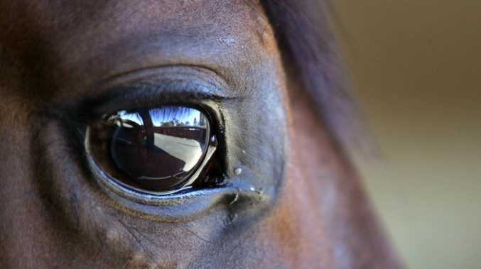 Inquiry launched into racehorse cruelty