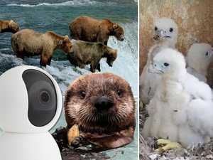 The livestreams every animal lover should watch