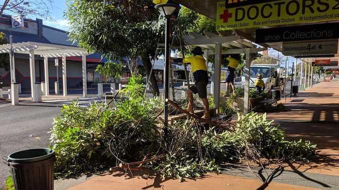 Trees chopped, axed from Gatton CBD