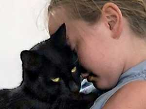 Anger as roaming dogs savage little girl's cat