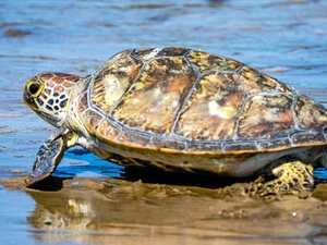 Investigation launched after turtle remains found