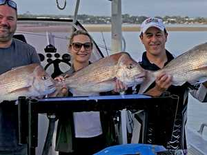 Temperatures perfect to land mackerel in the Gympie region