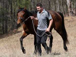 'He is fine': Racehorse condemned to death found alive