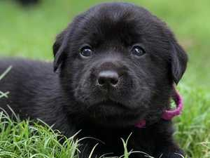 Funds help 'cute' puppies support local children