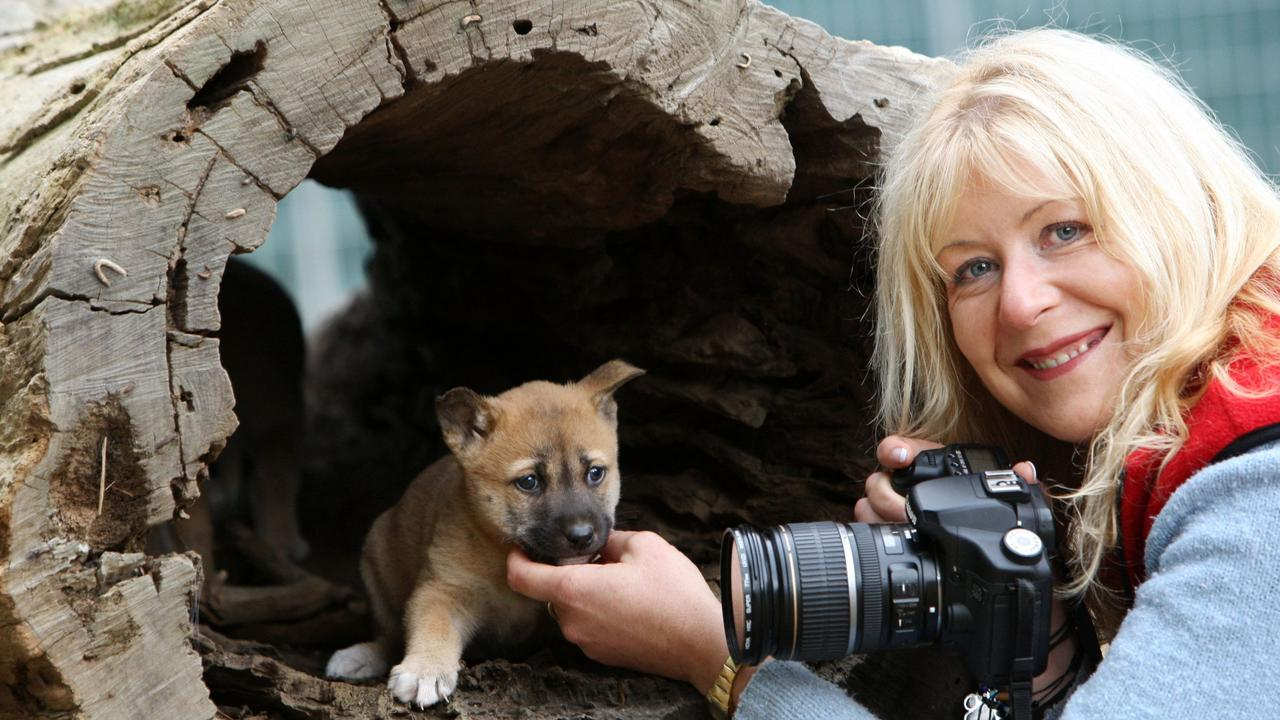 24/06/2010: 24/06/2010: Photographer Jennifer Parkhurst is facing $300,000 fine from the Queensland government for feeding Dingoes on Fraser Island. Jennifer visited The Dingo conservation centre Chewton with her father Harold Parkhurst for support from dingo expert Tehree Gordon. Pic. Bruce Magilton FF773169 Pic. Bruce Magilton FF773169